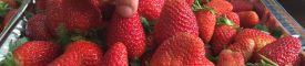 DA food pass ensures market availability of strawberry