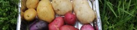 Benguet farmers test new potato varieties, see increased yields